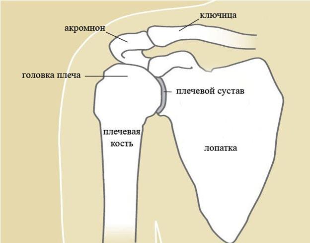 Лечение травматических повреждений плечевых суставов дисплазия тазобедренных суставов у взрослых симптомы