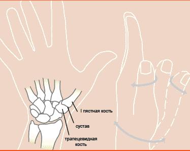 Пястно-запястный сустав большого пальца руки болит плечо сустав что делать